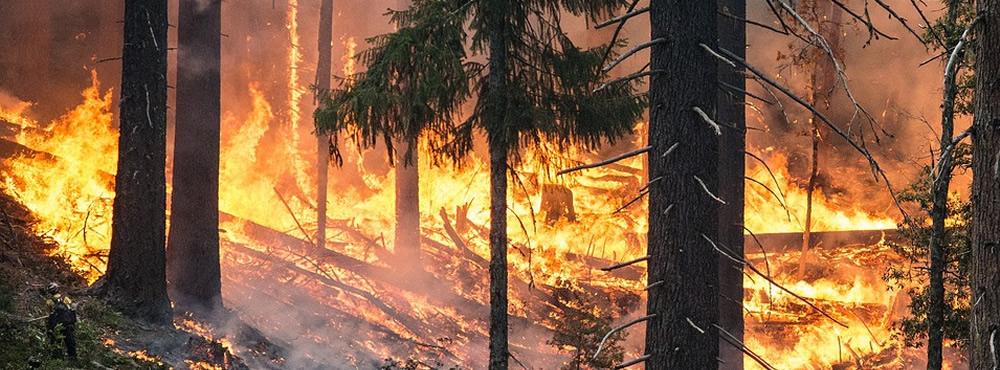 Low Carbon -  French technology to prevent the risk of forest fires